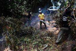 Members of the Chico Mendes Environmental Institute remove trees cut down by illegal wood cutters