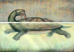 Researchers reveal ancient giant turtle fossil