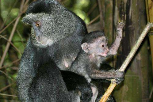 More omnivore dilemmas: Seasonal diet changes can cause reproductive stress in primates