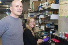 Researchers suggests that bacteria communicate by touch
