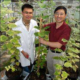 Scientists create low-lignin plants with improved potential for biofuel production