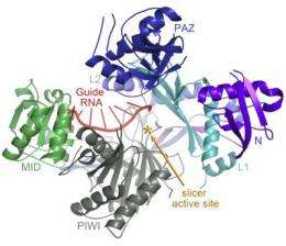 Scripps Research Institute scientists find the structure of a key 'gene silencer' protein