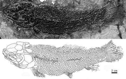 New Species of Sinamia Found From Western Liaoning, China