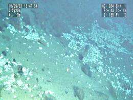 Researchers find rare life in Pacific ocean's depths