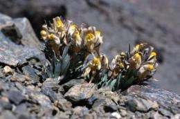 Accelerating climate change exerts strong pressure on Europe's mountain flora