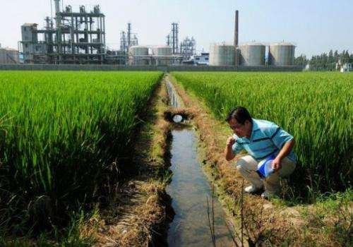 A Chinese environmental activist checks the water quality in an irrigation channel outside a chemical factory