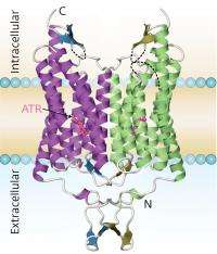 Algal proteins light the way