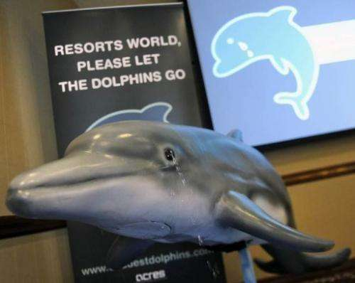 A model of a dolphin at the launch of a campaign by Singapore animal welfare group ACRES in May 2011