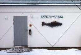 An aquarium for Skrei is seen in Norway's Arctic archipelago Lofoten