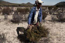Annual exports of rooibos have quadrupled in the last 13 years