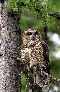 APNewsBreak: lan for owl targets rival (AP)