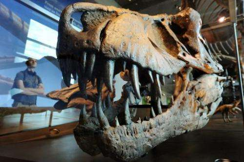 A visitor looks at a the skull of a Tyrannosaurus rex at the Natural History Museum of Los Angeles on July 7, 2011