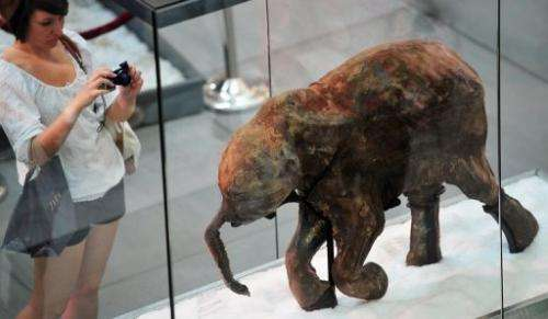 A visitor takes pictures of the carcass of the world's most well-preserved baby mammoth
