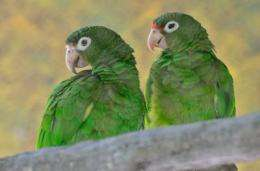 Big science: local funding supports open access sequencing of the Puerto Rican Parrot genome