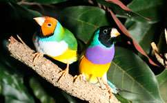 Bird's head color determines its personality