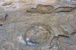 Broome dinosaur footprints detail substrate deformation unique on Earth