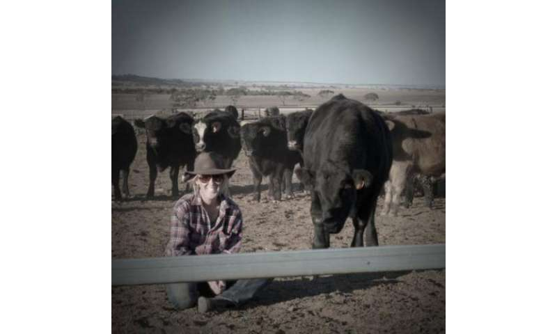 Calm cattle have a dark side