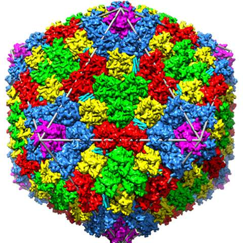 Chasing a common cold virus