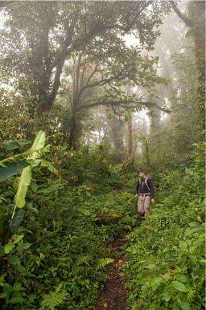 Greg Goldsmith in the montaine cloud forest of Monteverde Cloud Forest ...
