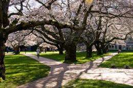 D.C. cherry trees: Blooms won't wait in warming world, research finds
