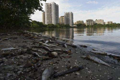 Dead fish float in the Marapendi lagoon on December 12, 2012, in the Barra da Tijuca area of Rio de Janeiro, Brazil