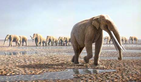 Desert footprints reveal ancient origins of elephants? social lives