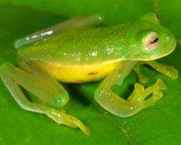 Despite global amphibian decline, number of known species soars