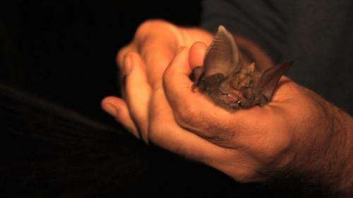 DNA and sonar data used in discovery of four new species of Horseshoe bat