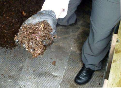 Earthworms are being used to churn decaying organic materials into compost