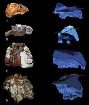 Eastern Eurasian archaic humans featured a bi-level nasal floor as seen in Neandertals