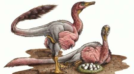 Eggs of enigmatic dinosaur discovered