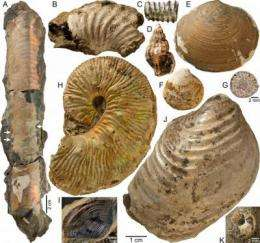 Ammonites found mini oases at ancient methane seeps