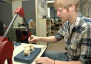 Establishing optic nerve positions in extinct animals could provide behavioral insights