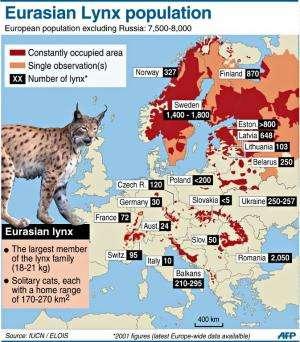 Eurasian Lynx population
