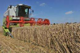 European cereal production is forecast to be down just 2.2 percent from last year