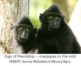 Evolutionary psychologists find macaques more likely influenced by friends than family