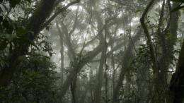Trees influence epiphyte and invertebrate communities