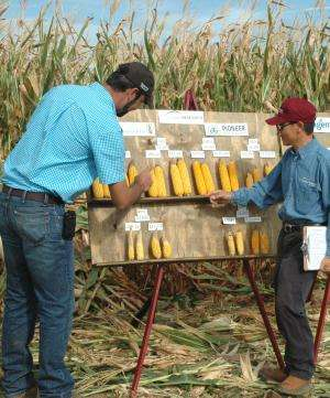 Expert: Drought-tolerant corn advances beginning to show
