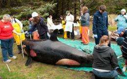 Experts sleuth out what killed Puget Sound orca (AP)