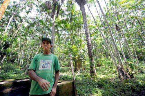 Farmer Manoel Jose Leite in an area reforested with acai trees in Anapu in the northern Brazilian state of Para