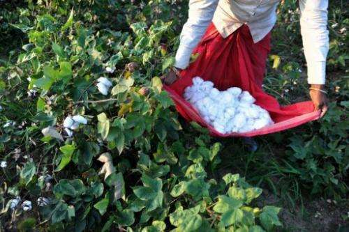 Farmers in the Sustainable Cotton Initiative sign a code of conduct not to use pregnant women and children as pickers