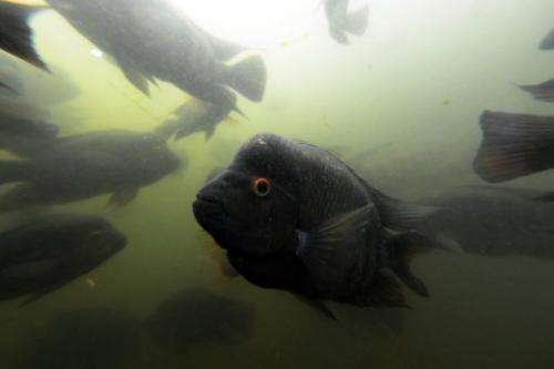Fish are seen in the aquarium of the National Biodiversity Institute in Heredia, Costa Rica, in May