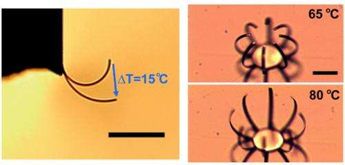 Flexing fingers for micro-robotics: Scientists create a powerful, microscale actuator