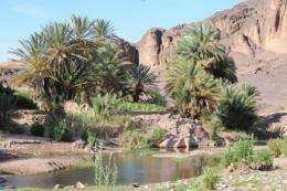 For centuries the sharing out of water in the oasis was managed in the