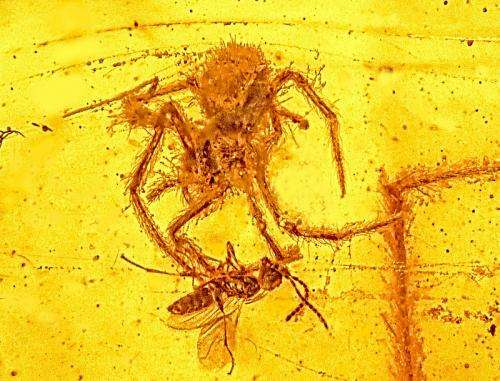 Fossil of ancient spider attack only one of its type ever discovered