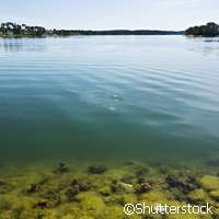 Further proof that rising temperatures lead to more algal blooms