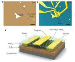 Researchers find molybdenite may be better suited for integrated logic circuits than graphene