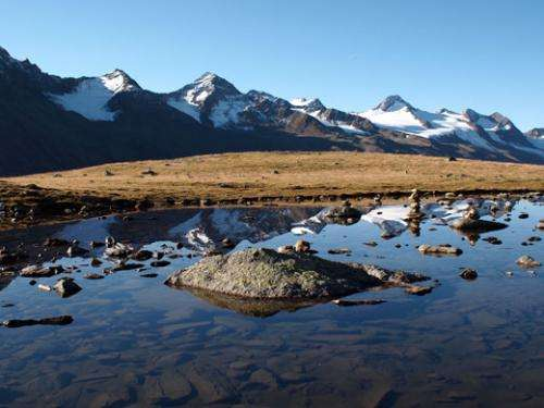Glacial organic matter and carbon cycling