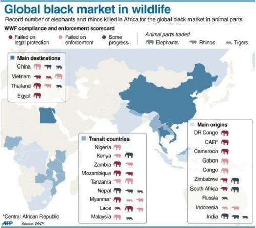 Global black market in wildlife
