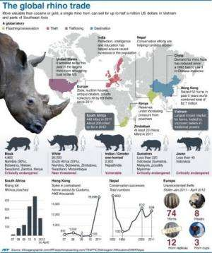Graphic factfile on the global underground trade in poached rhino parts